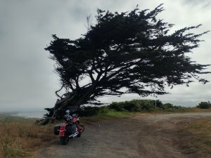 Lost Coast Tree.jpg